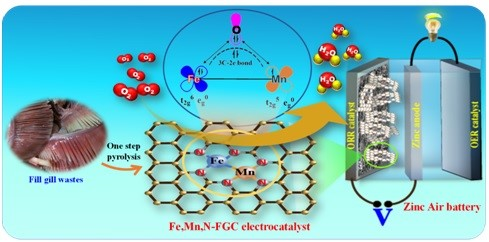 Fish gills used to develop efficient low-cost electro-catalysts for rechargeable metal-air battery