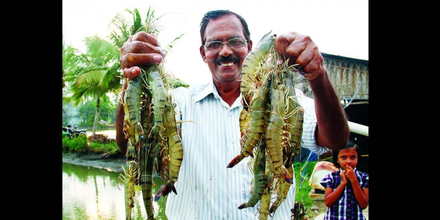 Japan completely lifts inspection of Black Tiger shrimps from India