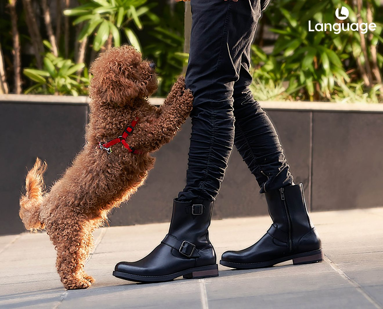 Premium Leather Boots from Language Shoes